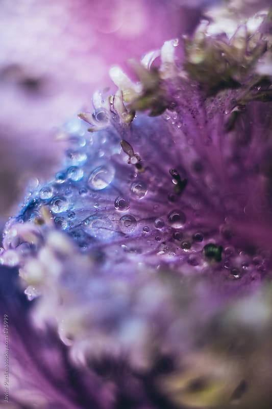 close detail of some flowers in the garden by Javier Pardina for Stocksy United