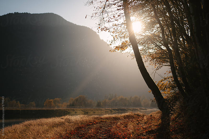Perfect light creating a glow in front of a mountain and behind a tree by B. Harvey for Stocksy United