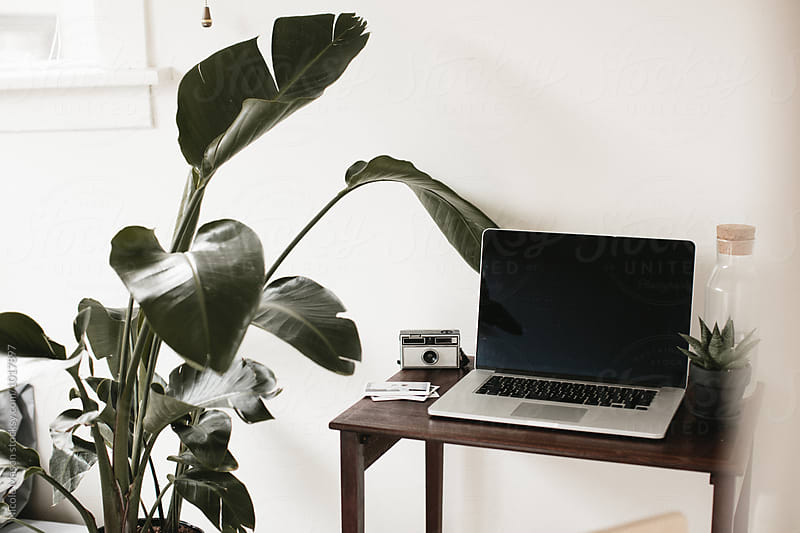 laptop computer on desk in white room with plant by Nicole Mason for Stocksy United