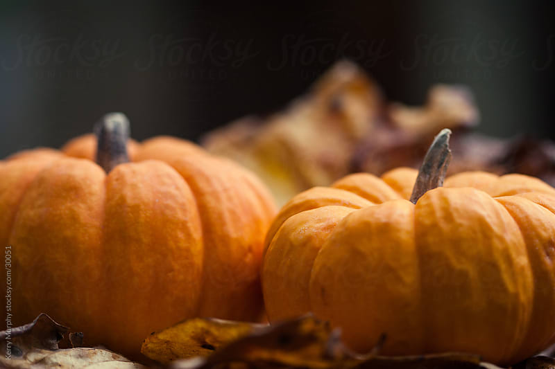 Small orange pumpkins sitting in Autumn leaves by Kerry Murphy for Stocksy United