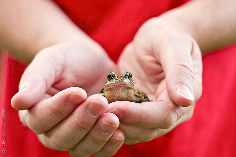 Man holding a British/English Common frog looking at camera by Kirsty Begg for Stocksy United