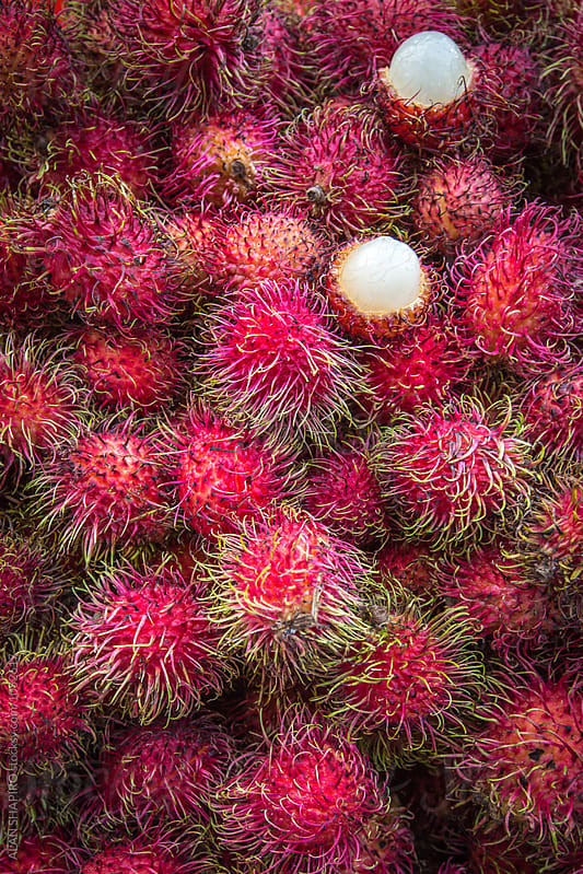 Rambutan by alan shapiro for Stocksy United