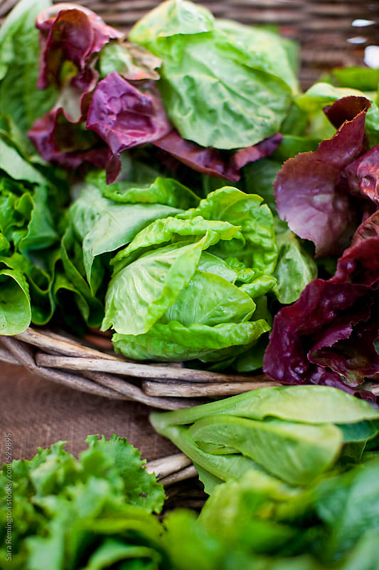 Organic Lettuce And Greens At Farmer's Market by Sara Remington for Stocksy United