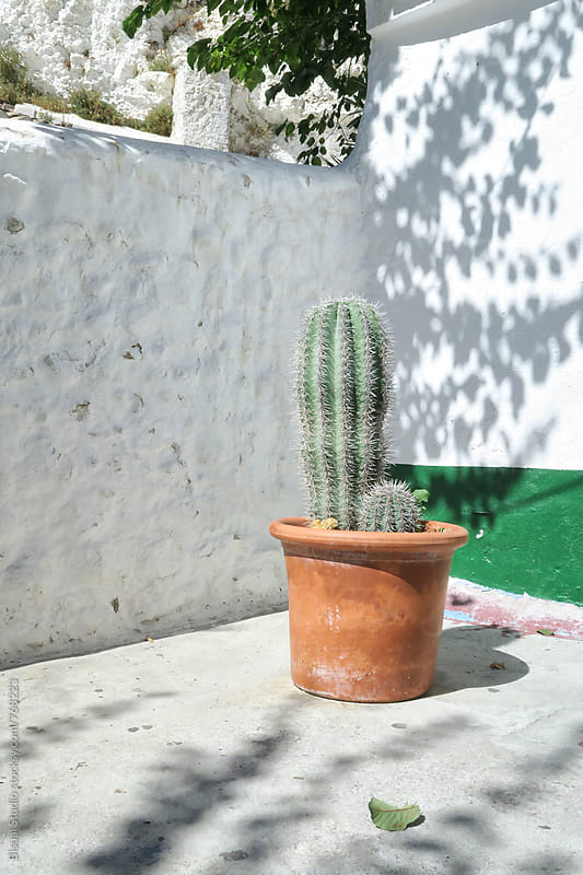 Cactus in an Andalusian courtyard by Bisual Studio for Stocksy United