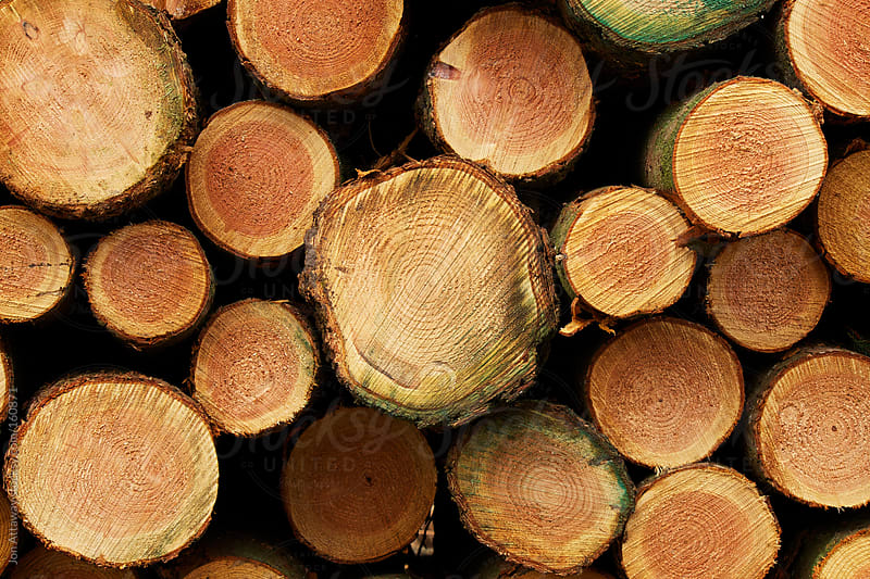 A cross section of logs piled up after felling. by Jon Attaway for Stocksy United
