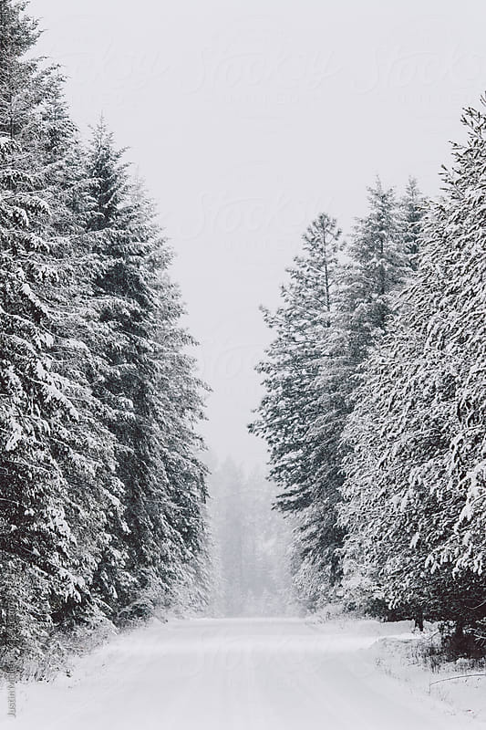 Tall pine trees on either side of a snow covered road by Justin Mullet for Stocksy United