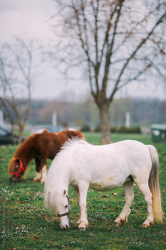 Little pony horses in a neighbourhood by Maja Topcagic for Stocksy United