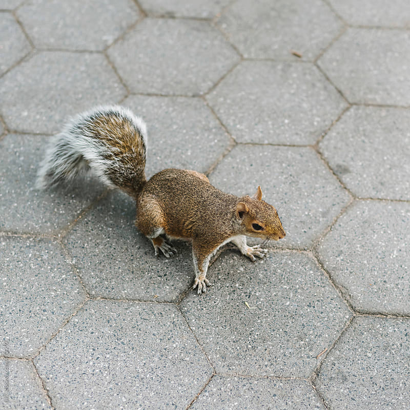 Squirrel in the park by GIC for Stocksy United