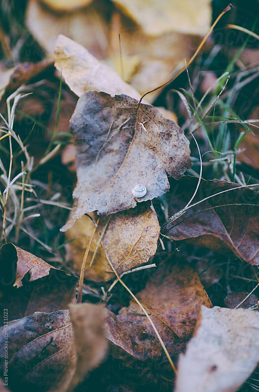 Tiny snail on a leaf by Eva Plevier for Stocksy United