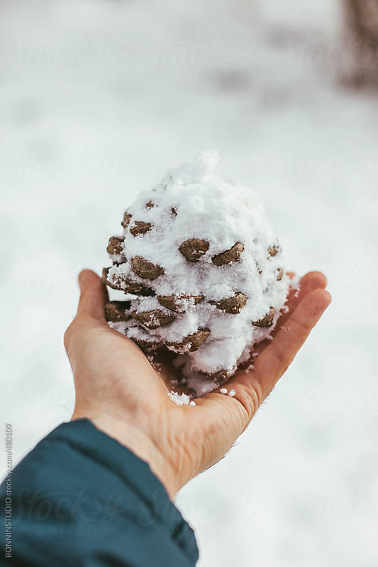 Man holding a pinecone covered with snow. by BONNINSTUDIO for Stocksy United