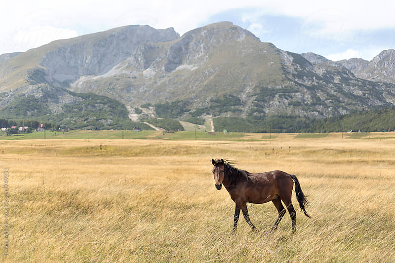 Wild horse standing in the meadow surrounded by mountains  by Jovana Milanko for Stocksy United