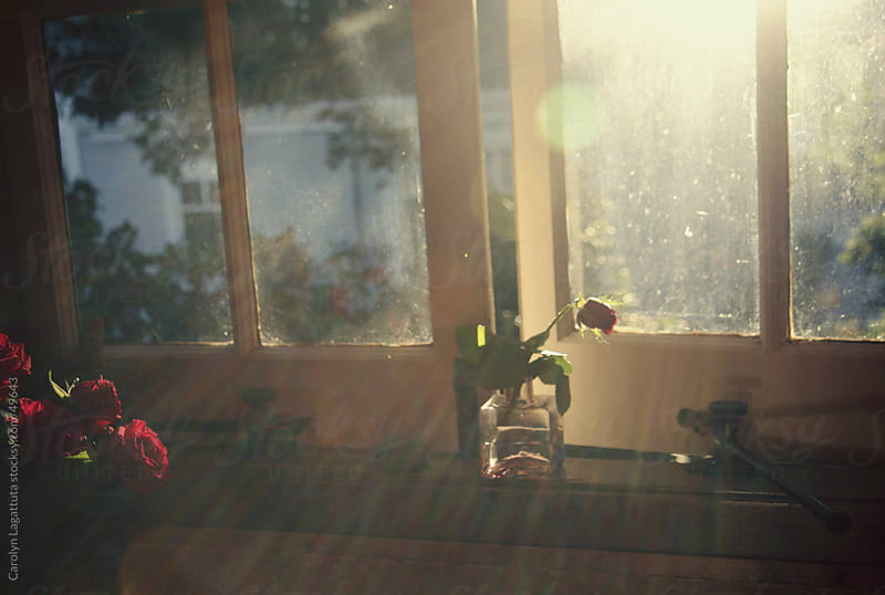 Kitchen window with the morning light streaming in. by Carolyn Lagattuta for Stocksy United