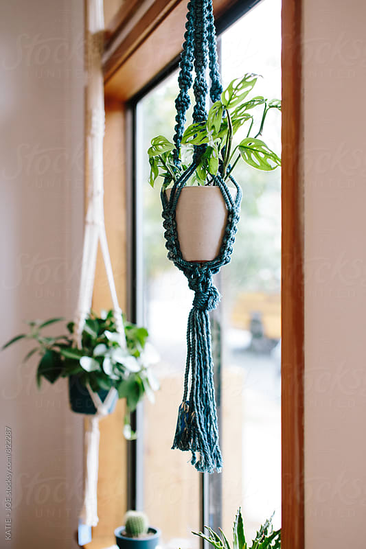 Hanging Plants by KATIE + JOE for Stocksy United