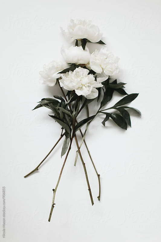 White Flowers on White Table in Natural Light by Nicole Mason for Stocksy United