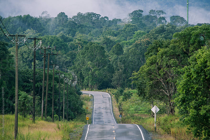 Road in the National Park by Chalit Saphaphak for Stocksy United