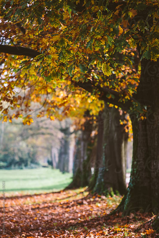 Trees in the park in autumn by michela ravasio for Stocksy United
