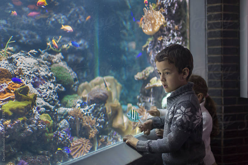 Children looking at the aquarium by Dejan Ristovski for Stocksy United