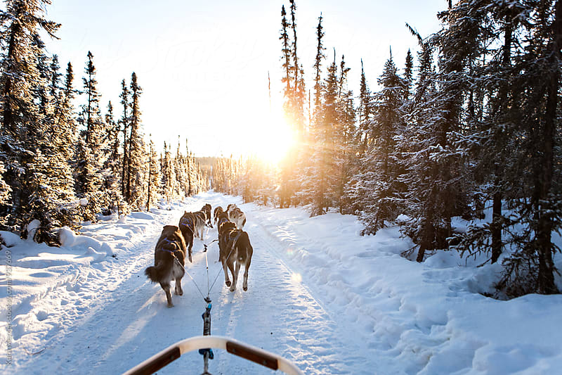 Dog Mushing in Alaska by Kara Mercer for Stocksy United