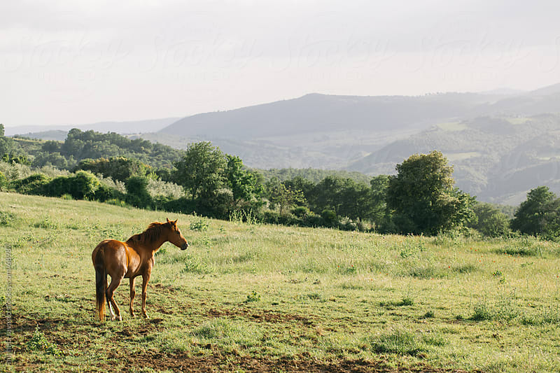 Horse in the Tuscan countryside by michela ravasio for Stocksy United