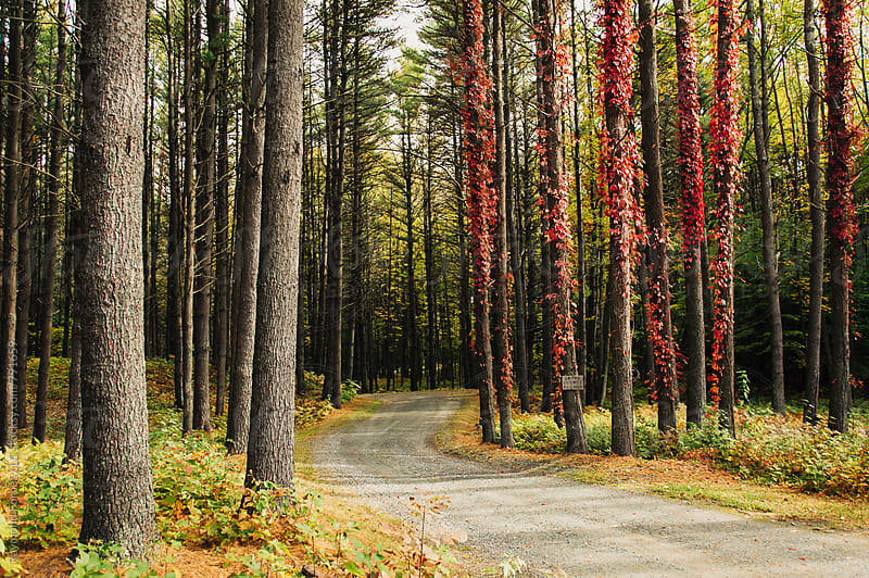 Dirt Road in Lakes District New Hampshire by Raymond Forbes LLC for Stocksy United