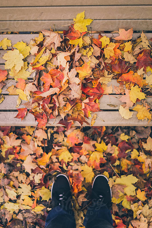 Autumn Leaves on a Bench by Arthur Chang for Stocksy United