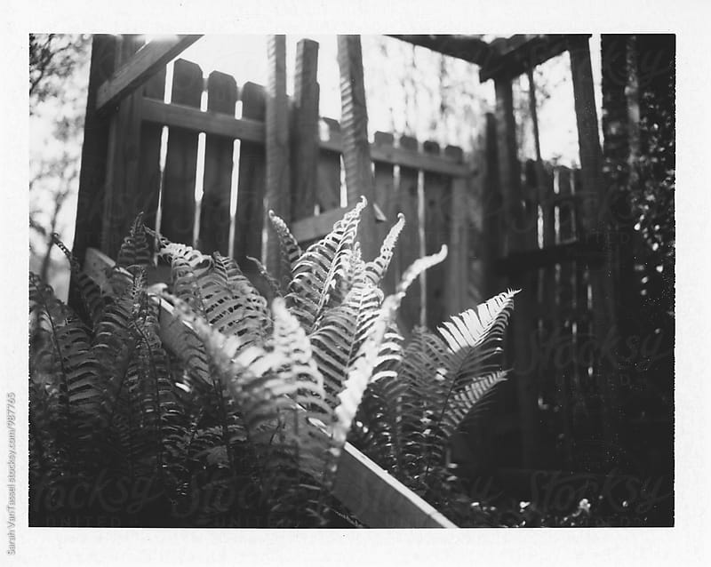 Ferns in black and white. by Sarah VanTassel for Stocksy United