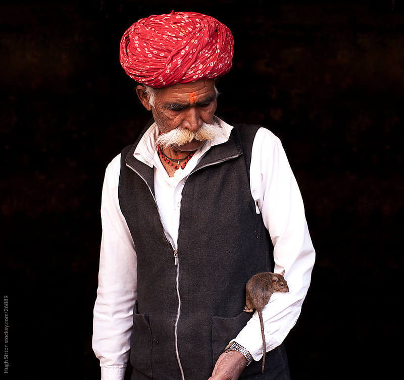 Rajasthani man with rat. Bikaner Rat Temple. Rajasthan. India by Hugh Sitton for Stocksy United