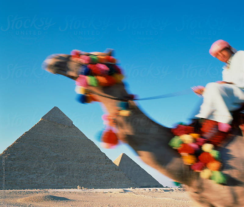 Blurred motion of decorated camel, pyramids in the background. by Hugh Sitton for Stocksy United