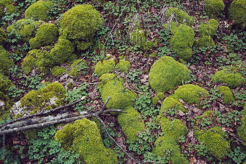 Mossy forest by Robert Kohlhuber for Stocksy United