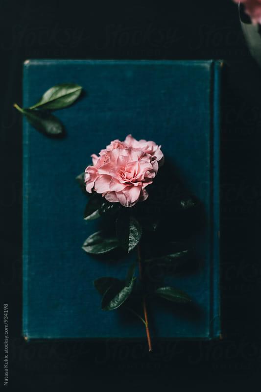 Vintage flowery backgrounds by Natasa Kukic for Stocksy United