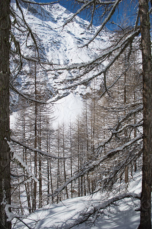 Winter forest covered with snow by Gabriel Diaz for Stocksy United
