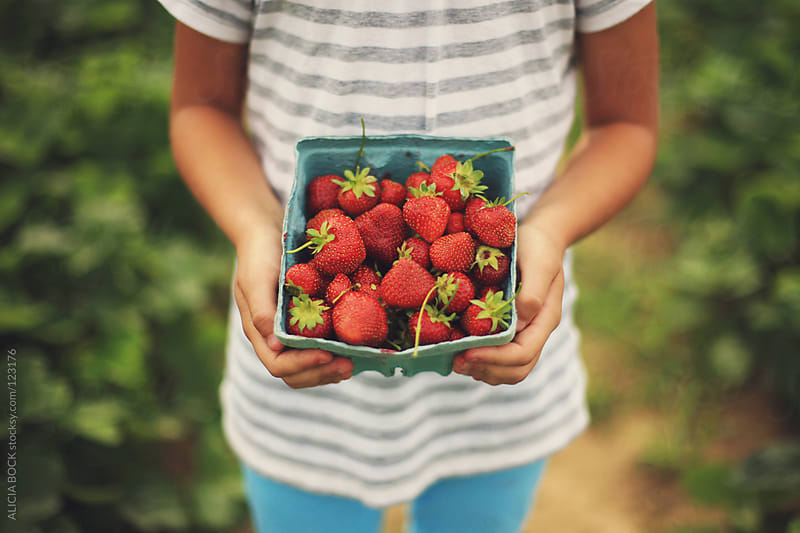 Holding Ripe Strawberries #1 by ALICIA BOCK for Stocksy United