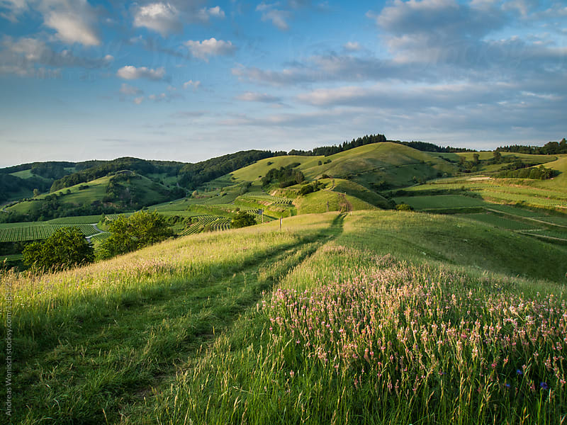 Path over Green Summer Hills by Andreas Wonisch for Stocksy United