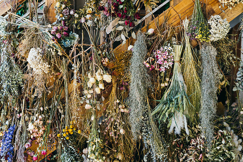 Dried flowers hanging on the wall of flora shop by MaaHoo Studio for Stocksy United