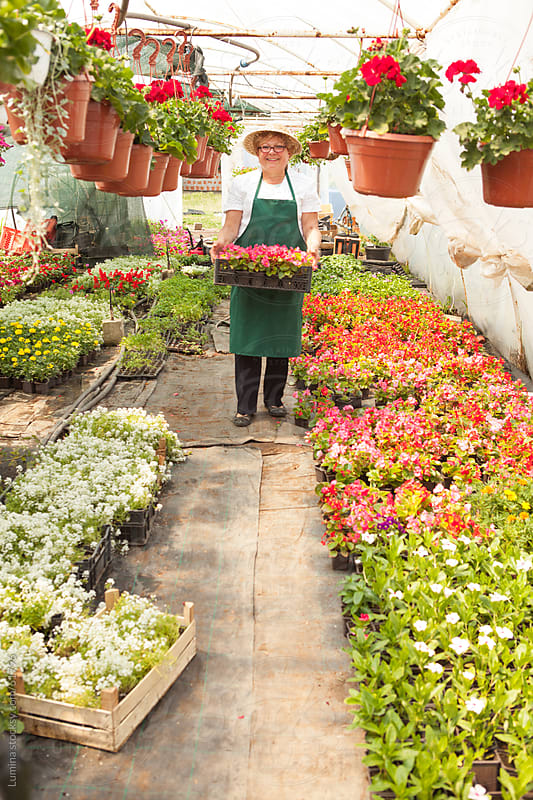 Woman Working in a Nursery Garden by Lumina for Stocksy United