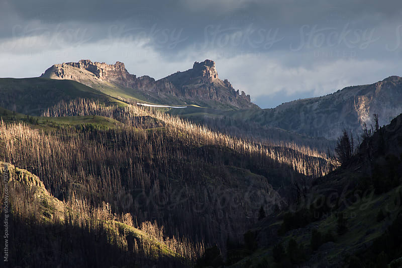 Trees burned from forest fire on remote wilderness mountain landscape by Matthew Spaulding for Stocksy United