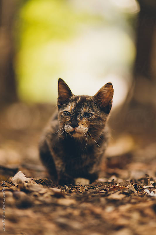 little kitten on a forest road by Javier Pardina for Stocksy United