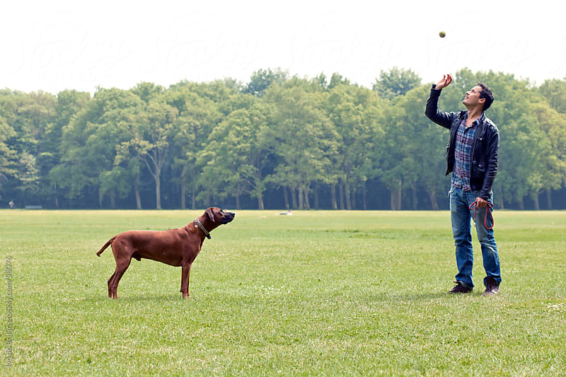 A man and his dog, anticipating the throw, playing in the park with a ball by Ivo de Bruijn for Stocksy United