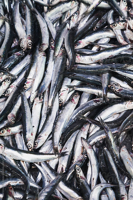 Fresh sardine at the fish market by Borislav Zhuykov for Stocksy United