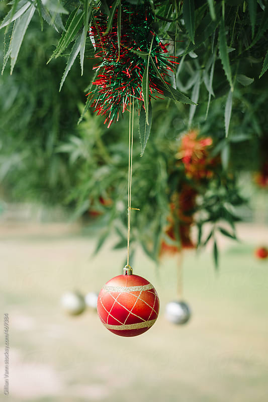 christmas ornament hanging in tree outdoors, bush christmas in Australia by Gillian Vann for Stocksy United