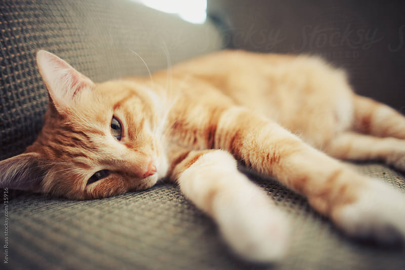 Lazy Couch Cat by Kevin Russ for Stocksy United