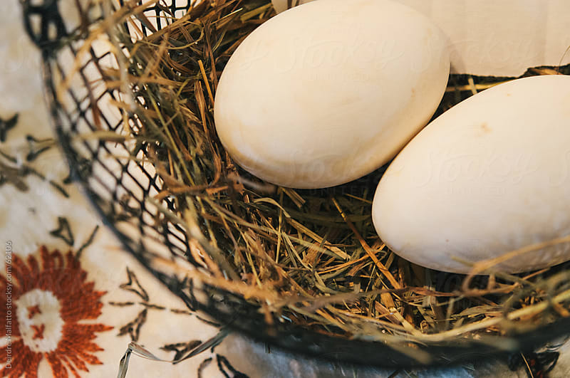 Goose eggs in a basket by Deirdre Malfatto for Stocksy United