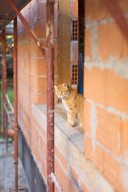 Cat sitting on windosill at house under construction by Laura Stolfi for Stocksy United