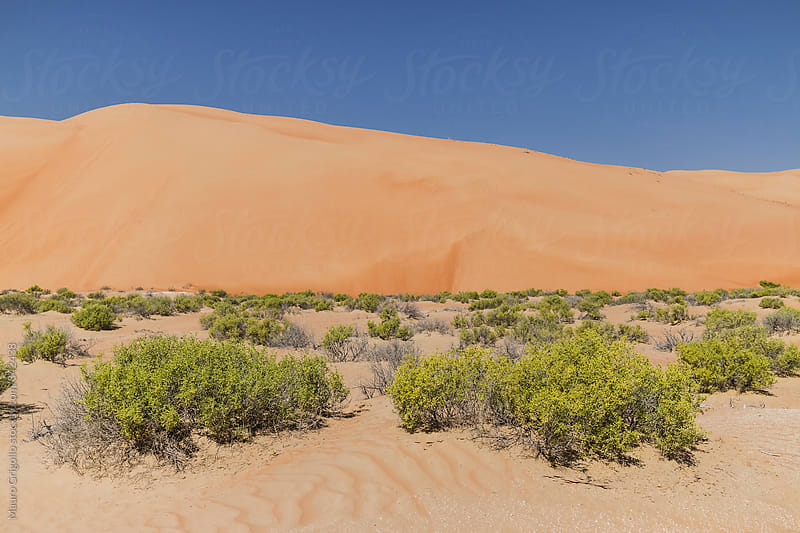 Desert,  United Arab Emirates by Mauro Grigollo for Stocksy United