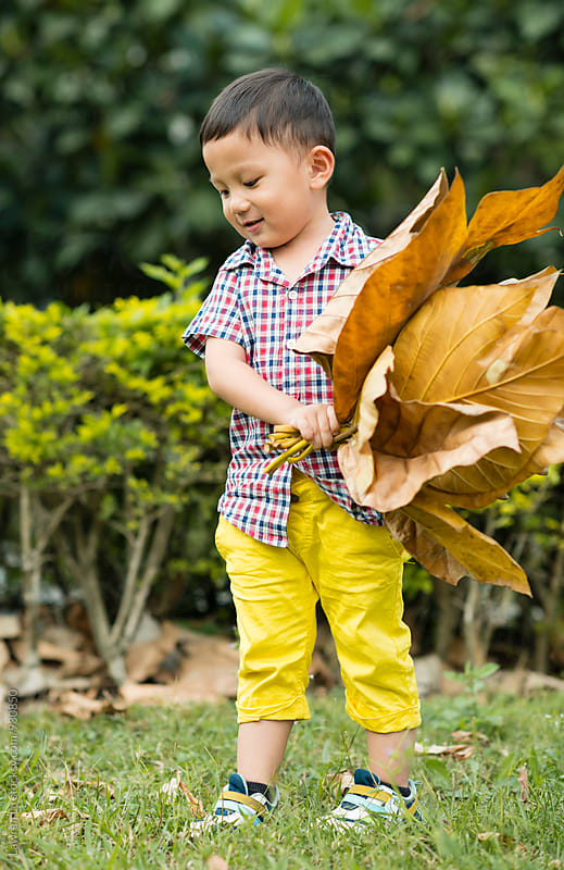Smiling little boy holding stack of dried leaves by Lawren Lu for Stocksy United