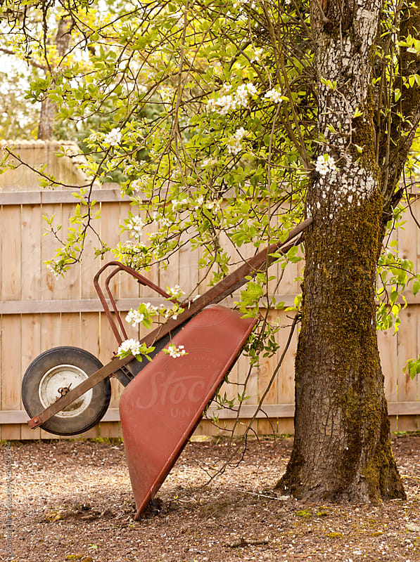 Wheelbarrow leaning up against pear tree by Daniel Hurst for Stocksy United