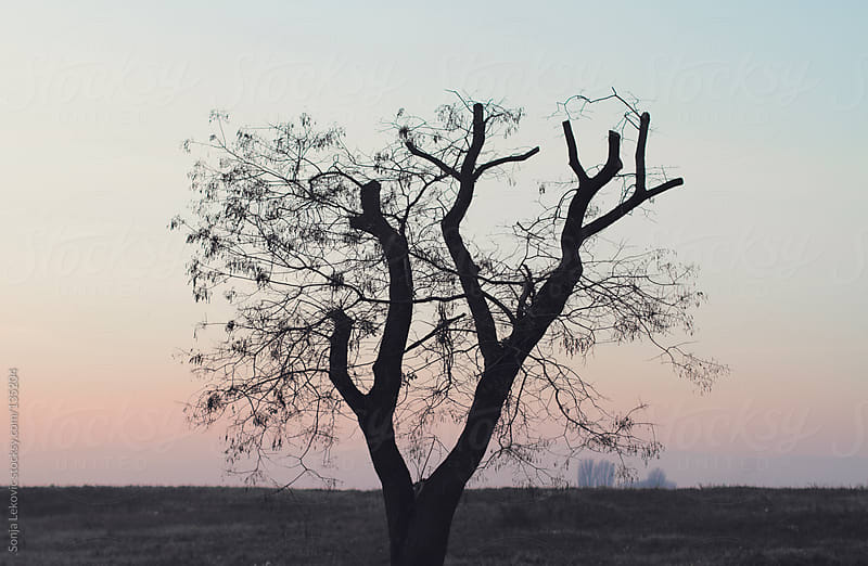 lonely black tree by Sonja Lekovic for Stocksy United