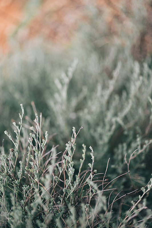 detail of some green plants at sunset by Javier Pardina for Stocksy United