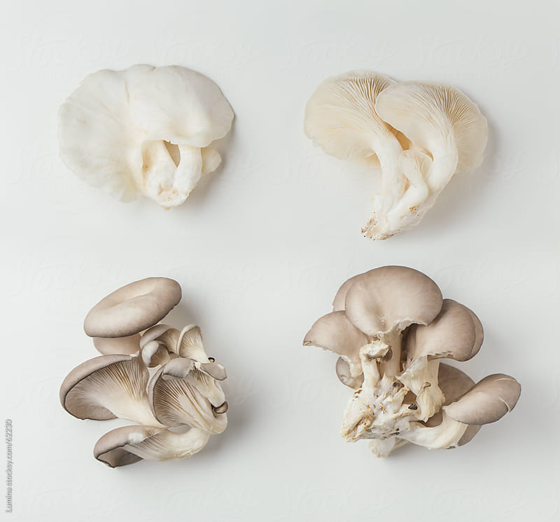 Mushrooms  by Lumina for Stocksy United