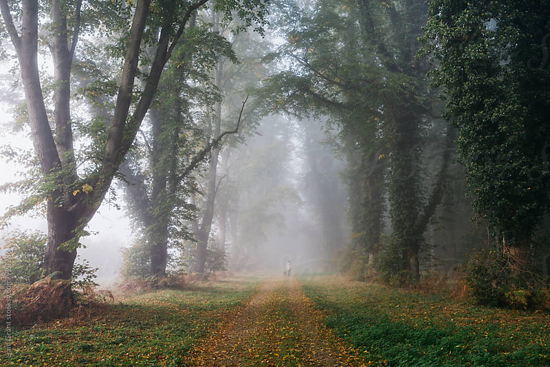 Female walking her dog in early morning fog between an avenue of trees. Norfolk, UK. by Liam Grant for Stocksy United